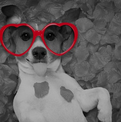 small dog wearing red heart sunglasses